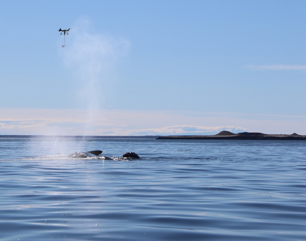 drones whales research