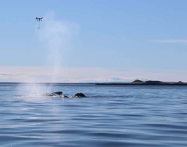 drones-whales-research