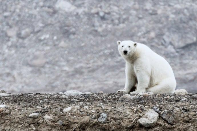 intel-polar-bear-arctic-drones