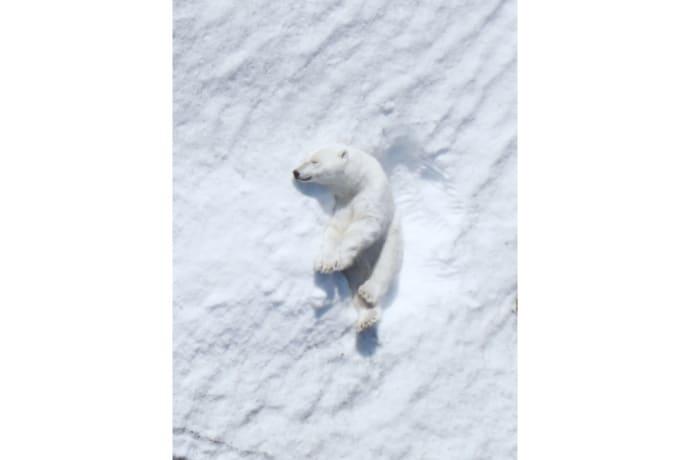 intel-polar-bear
