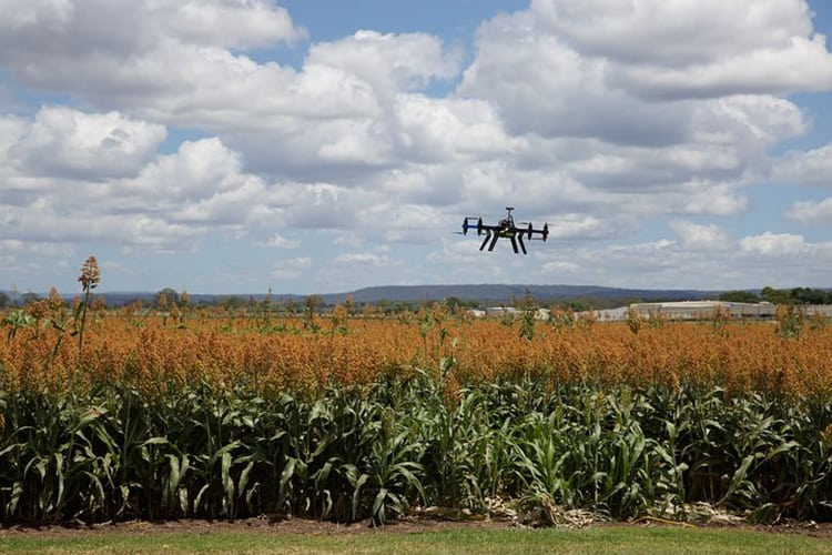 drone-jobs-agriculture