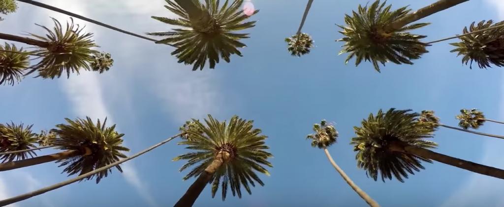 deremo-palm-trees