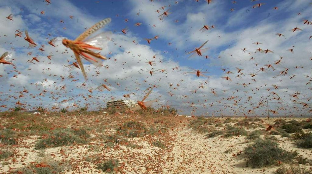 India fighting locusts with pesticide spraying drones