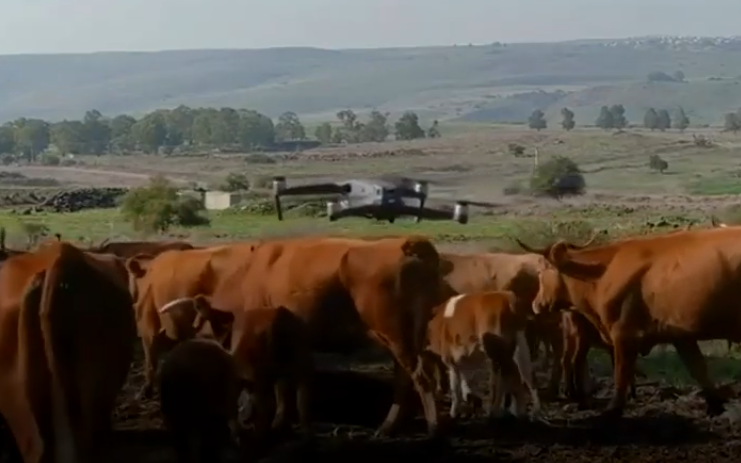 beefree-agro-drone-herding.png