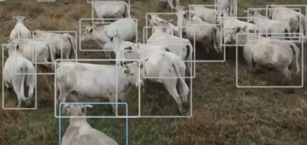BeeFree Agro Uses Drones and AI-Powered Software to Herd Cattle