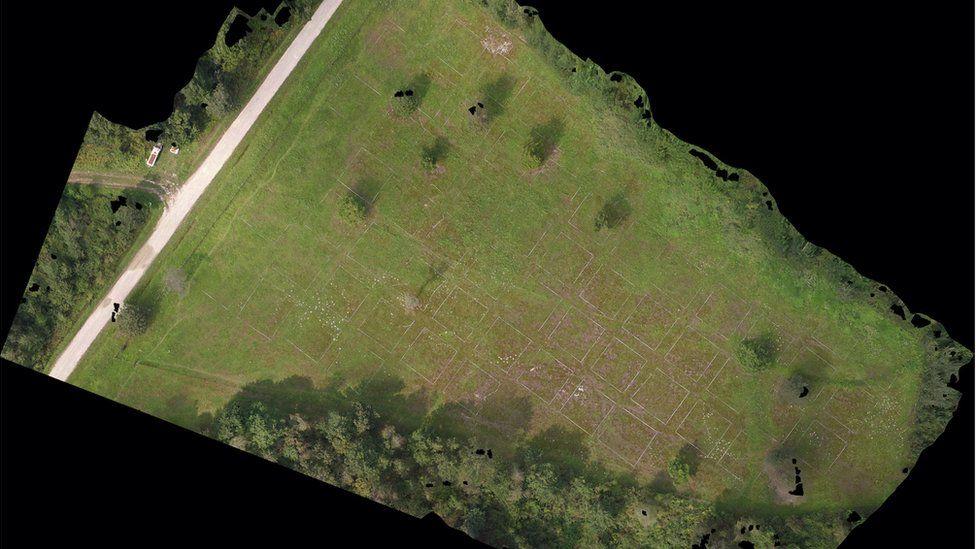 bees-drones-minefield