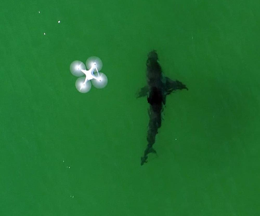 drones-sharkssmart-australia