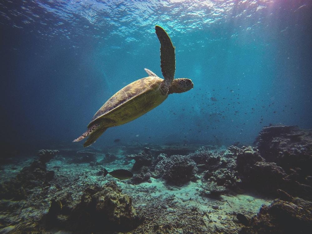 sea-turtles-rats-drones