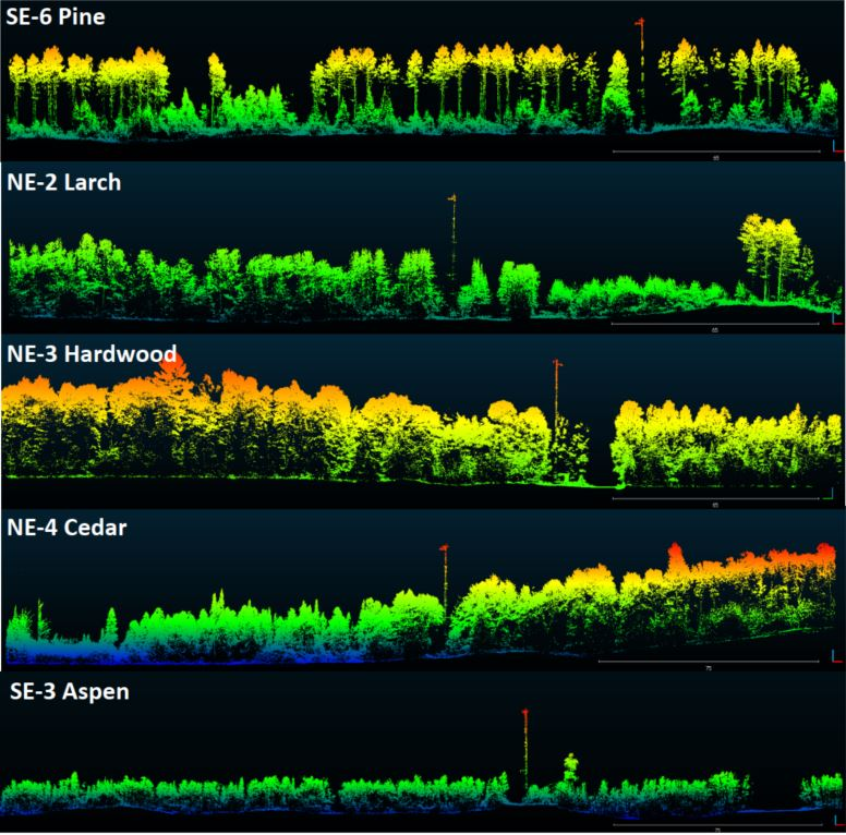 routescene-forest-mapping